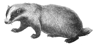 Free Badger Clipart