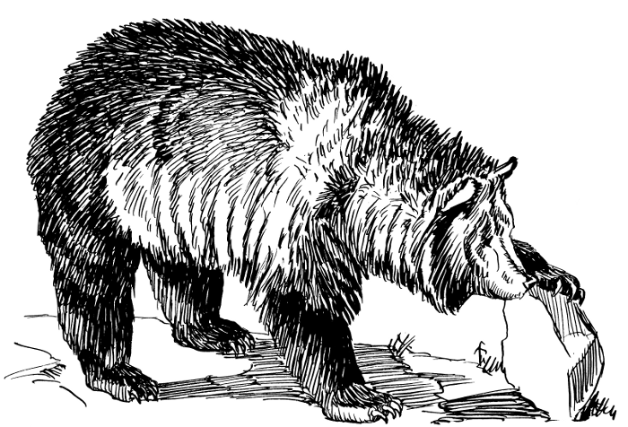Free Kodiak Bear Clipart 1 Page Of Free To Use Images