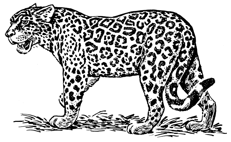 Free Cheetah Clipart - Clip Art Image 2 of 5