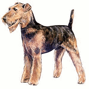Free Dog Breeds A Clipart