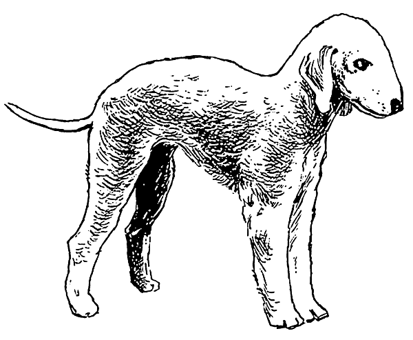 Free Dog Breeds B Clipart
