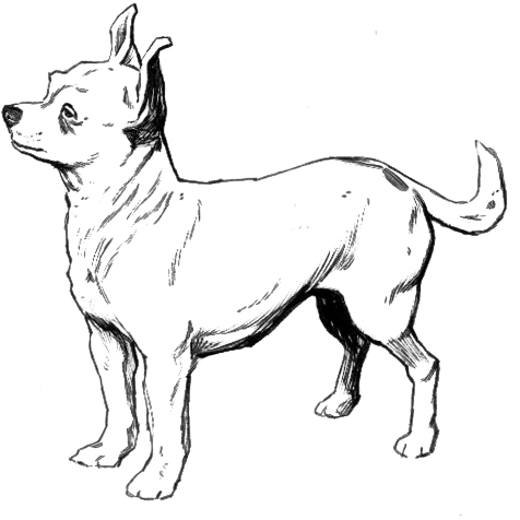 Free Dog Breeds C Clipart