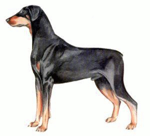 Free Dog Breeds D Clipart