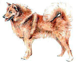 Free Dog Breeds F Clipart