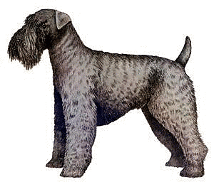 Free Dog Breeds K Clipart