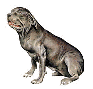 Free Dog Breeds N Clipart