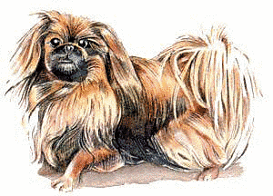 Free Dog Breeds P Clipart