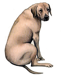 Free Dog Breeds R Clipart