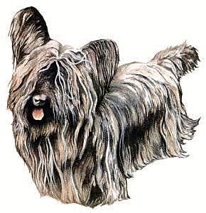 Free Dog Breeds S Clipart