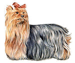 Free Dog Breeds Y Clipart