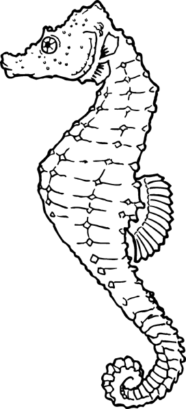 Free Seahorse Clipart