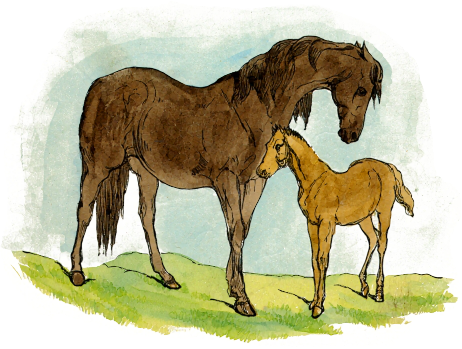 Free Foal Clipart