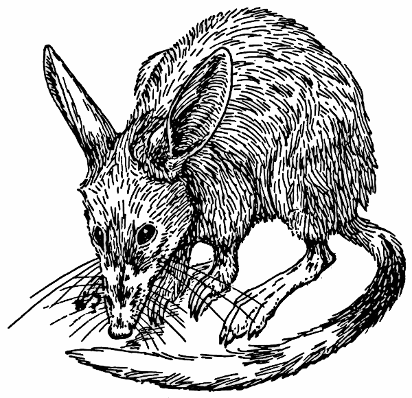 Free Bandicoot Clipart