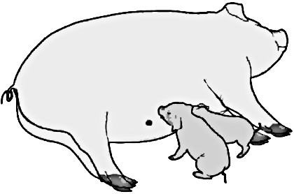 Free Domestic Pig Clipart