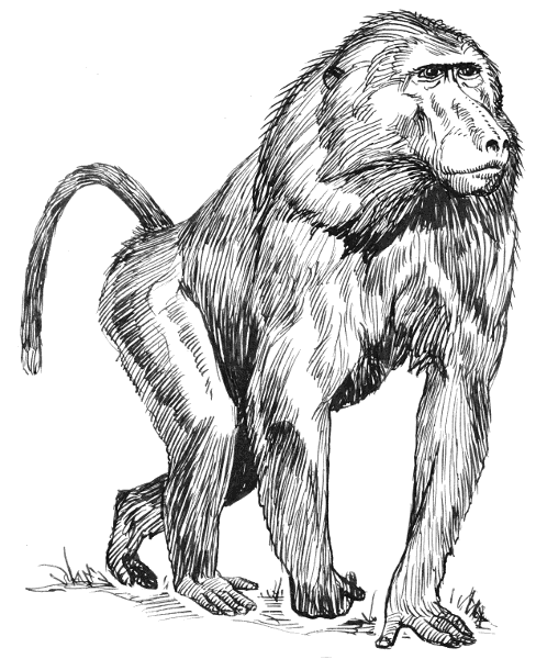 Free Baboon Clipart