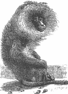 Free Old World Monkey Clipart