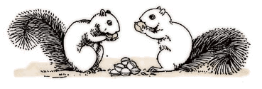 Free Squirrel Clipart