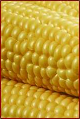 Free Sweet Corn Clipart